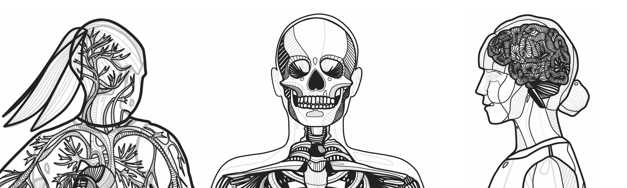 Ilustracje Anatomia norweskiego