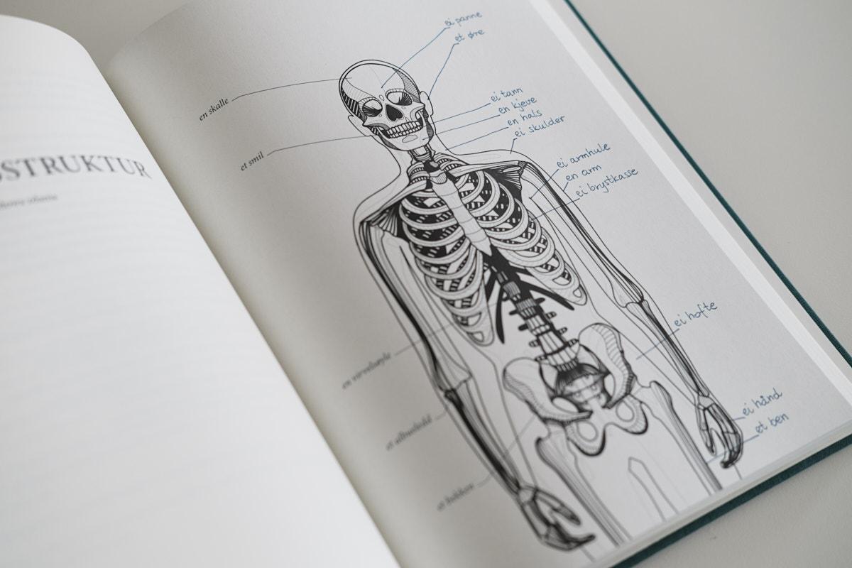 Anatomia norweskiego, podpisany szkielet