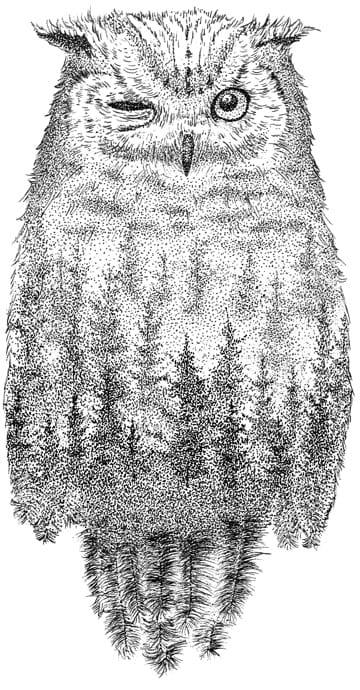 Ilustracja Nocnej Sowy